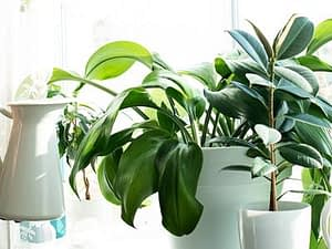 Spring care tips for happy houseplants