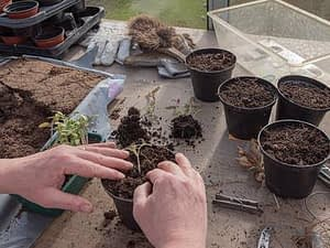 Now is the best time to plant a vegetable garden